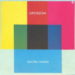 Opossum_ElectricHawaii